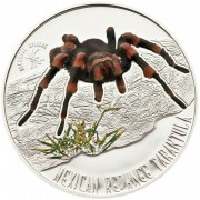 Niue Island MEXICAN REDKNEE TARANTULA series VENOMOUS SPIDERS Silver Coins 2012 Proof