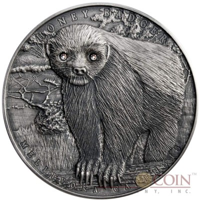Niue Island HONEY BADGER MELLIVORA CAPENSIS series BRAVE ANIMALS $2 Silver coin 2015 High relief Antique finish 2 oz