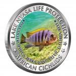 "Copper Colored Coin PSEUDOTROPHEUS ZEBRA LONG PELVIC GALIREA REEF 2010 ""African Cichlids"" Series, Malawi"