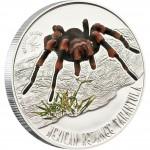 Серебряная монета МЕКСИКАНСКИЙ КРАСНОКОЛЕННЫЙ ТАРАНТУЛ 2011 серии «Ядовитые Пауки»