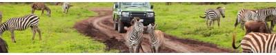Wildlife in Need
